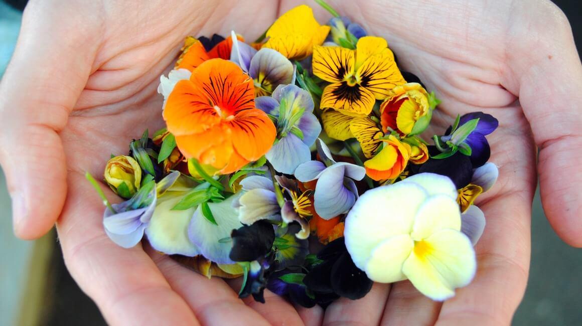 Jestivo cvijeće