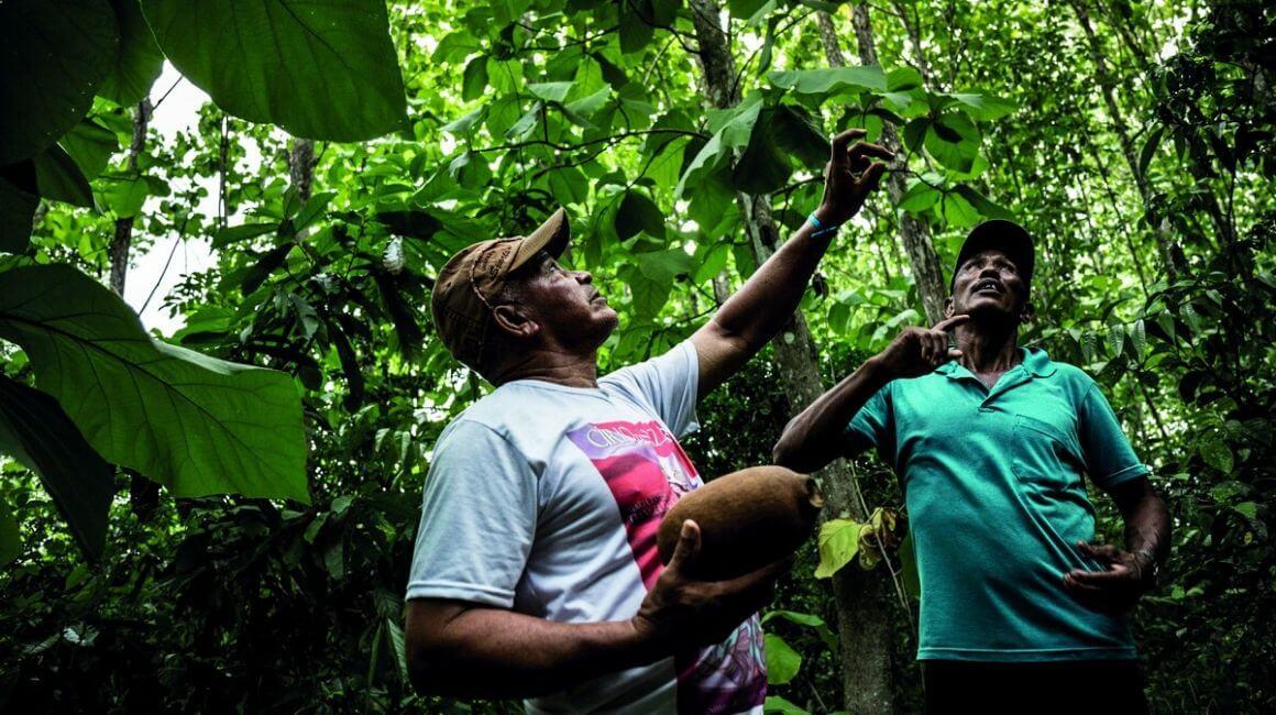 Klorane i zaštita od deforestacije