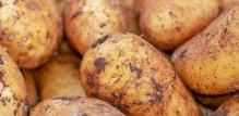 Jestivi krumpiri