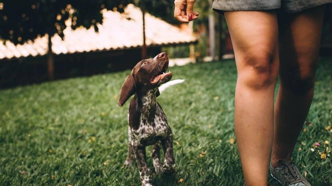 Prednosti šetanja pasa