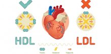 HDL i LDL kolesterol