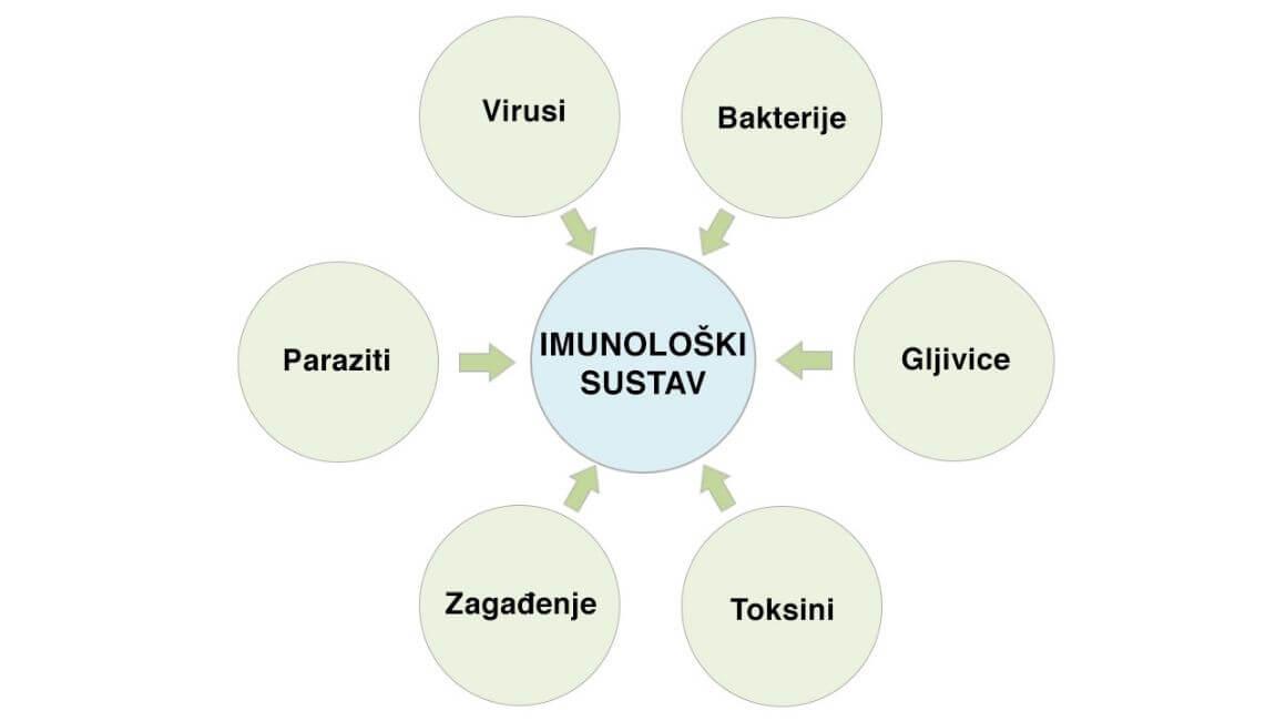 Imunološki grafikon