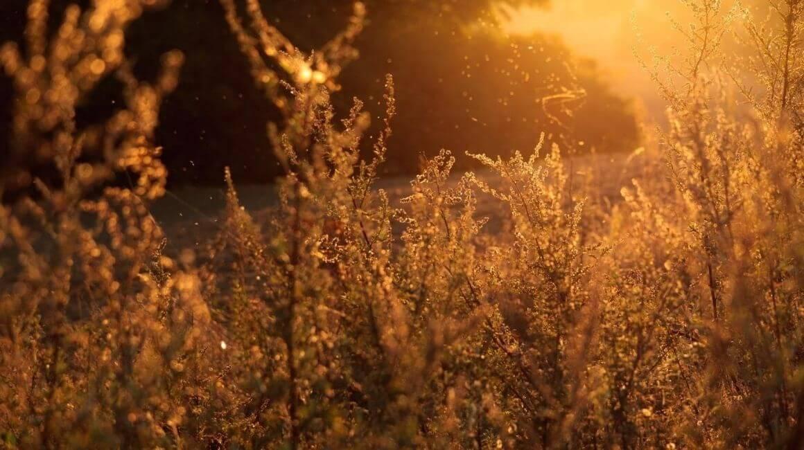 Sezonski alergeni